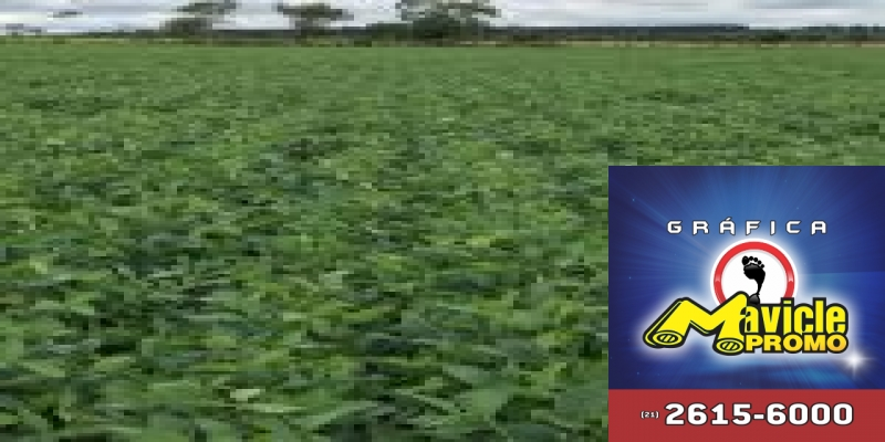 """c98b0eb3e96 Sindigás """" Agricultura Sustentável  O Amanhecer de uma Nova Era ..."""